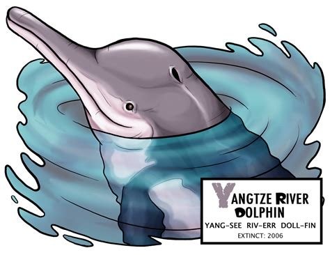 yangtze river coloring page dolphin clipart baiji pencil and in color dolphin