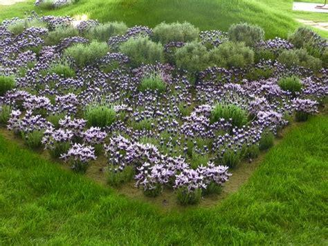 giardino con ulivo fiori attorno agli ulivi un quadrato di giardino