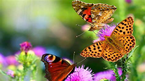 imagenes hermosas sorprendentes image gallery hermosa naturaleza con animales