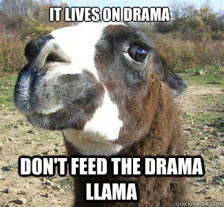 Drama Llama Meme - drama llama memes quickmeme