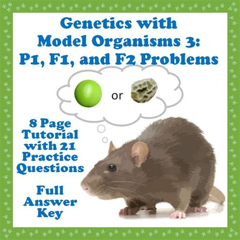 tutorial questions on genetics a step by step tutorial on how to solve simple p1 f1 and