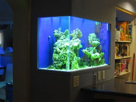 wall aquarium saltwater aquarium in wall 180 gallon in wall reef