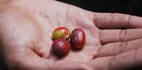 The Cost Of Beans by Not Just A Few Beans The True Cost Of Coffee