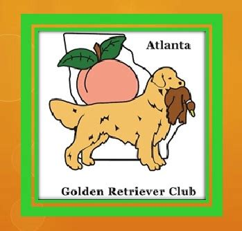 golden retriever club of greater los angeles golden retriever club events dogs in our photo