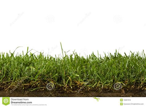 grass section lawn and soil cross section isolated on white stock photo