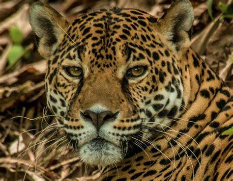 10 Easy Ways Kids Can Help Save Rainforests   Rainforest Alliance