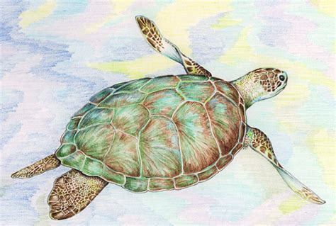 what color is a turtle artist