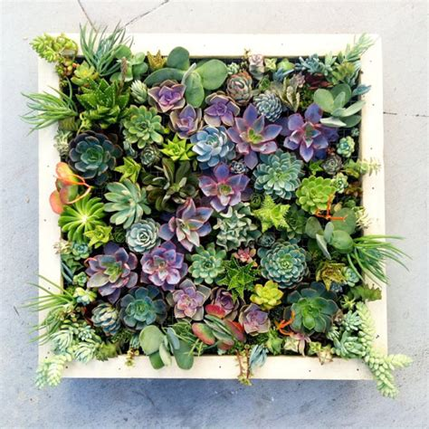 growing a vertical wall garden of succulents living