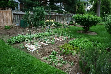 garden in backyard vegetable gardening tips starting backyard vegetable