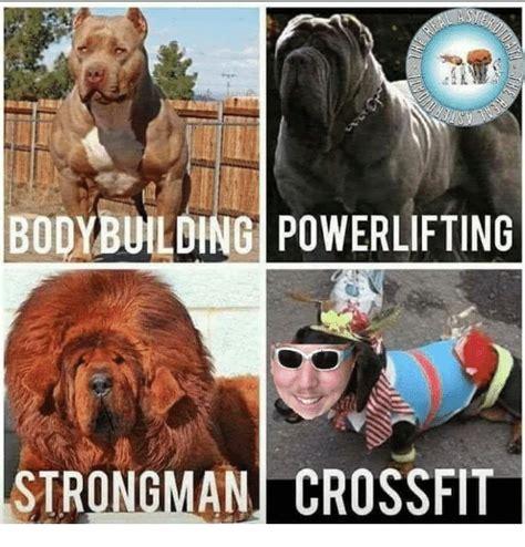 Strongman Meme - bodybuilding memes crossfit www pixshark com images