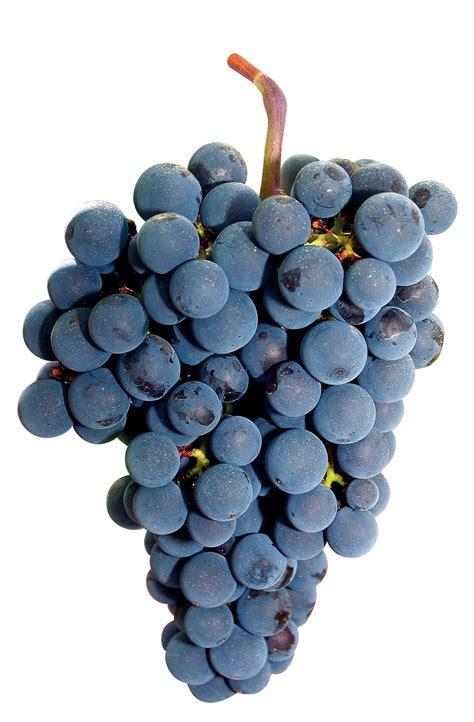 imagenes de vinos uvas merlot uvas de vino tintas caracter 237 sticas cultivo