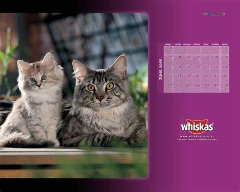 whiskas Cat Food   Cute Kitten Desktop 1280x1024 NO.15