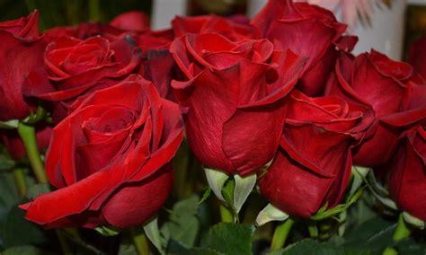 imagenes bellas rojas pin by matilde komjetan on flores saludos mensajes y