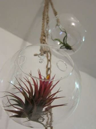 Air Plant Chandelier Sunday Snapshot Crocheted Air Plant Chandelier The Zen Of