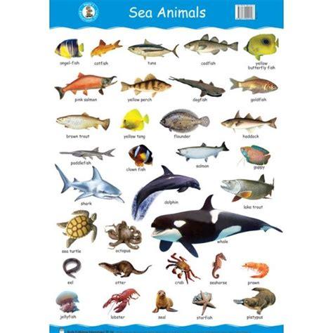 Oceanseven Animal Artworks 9 Tx sea animals wall chart jpg 600 215 600 animals preschool class worksheets