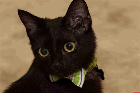 bones  black cat friday cute cats hq pictures