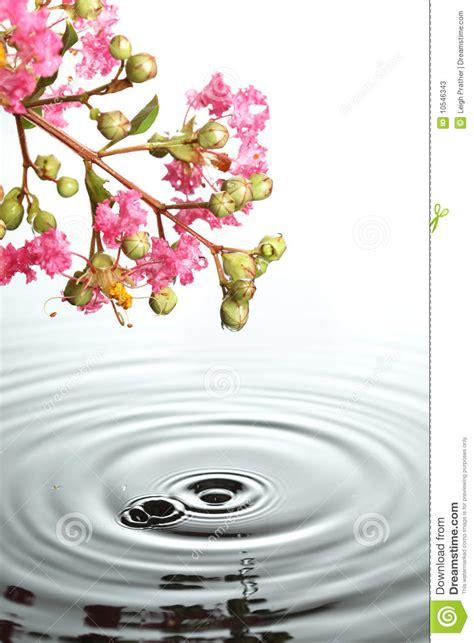 imagenes de flores sobre el agua flores sobre el agua fotos de archivo imagen 10546343