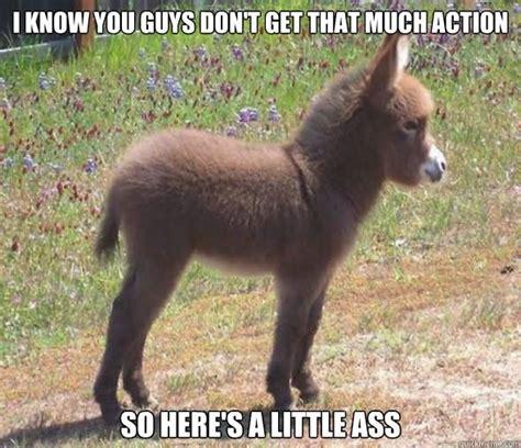 Donkey Meme - funny donkey meme