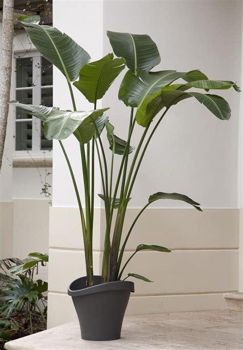 large house plants  light