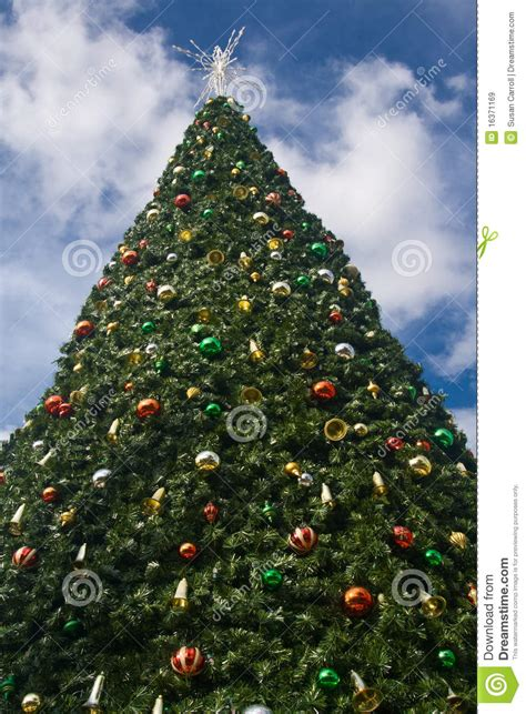 large christmas tree royalty free stock images image