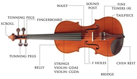 labelled diagram of a violin parts of the violin and bow for violin
