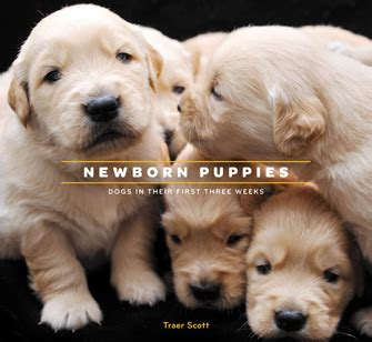 how to care for newborn puppies and their photographer captures newborn puppies in their 3 weeks of