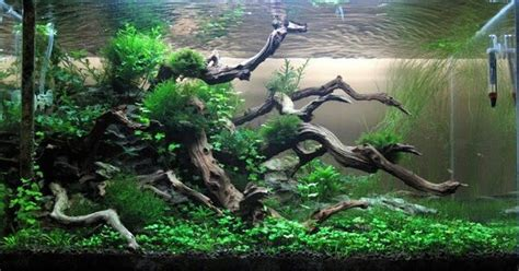 aquascape online malaysia aquarium drift wood what to buy and where to buy it