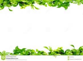 Flower and leaf border joy studio design gallery best design