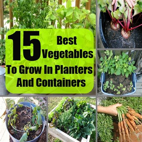 vegetable gardening how to grow vegetables the easy way books 15 best vegetables to grow in planters and containers