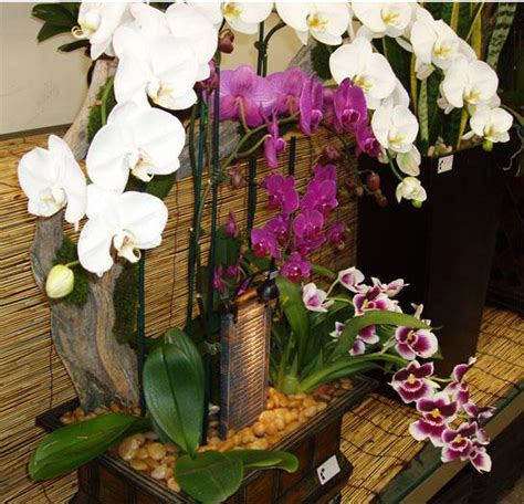 orchids care indoor plant