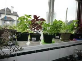 garden kitchen ideas garden windows for kitchens upgrading the outlook right away homesfeed