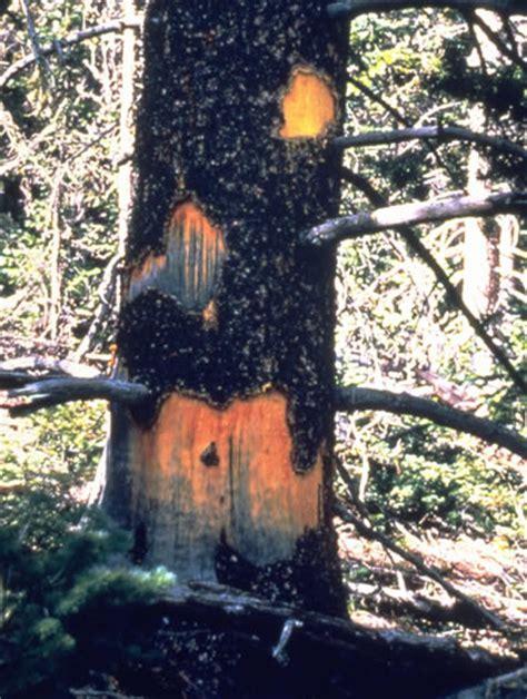 Porcupines   Rocky Mountain National Park (U.S. National