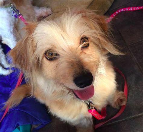 brighton puppy rescue brighton rocket rescue