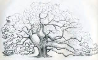 Oak Tree Drawing Pics Photos How To Draw A Oak Trees