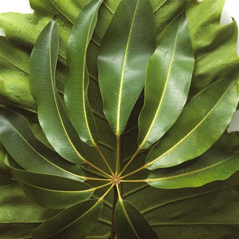 inhouse plants easy houseplants to care for indoor plants fffbc ghk schefflera s garden trends
