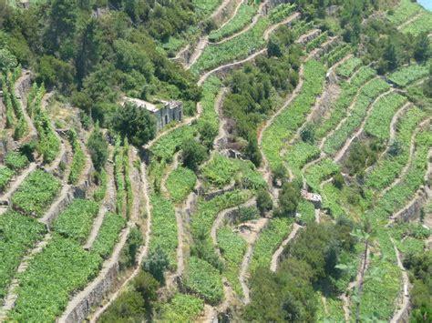 terrazzamenti liguri sanremo mediterranea settembre 2013