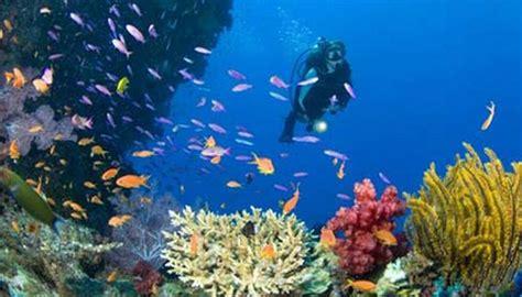 Marine 35gr Makanan Ikan Laut Free blogganeh pemandangan bawah laut yang indah
