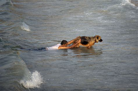 water rescue dogs nov 7 photo brief volcano eruption russian spacecraft launch and water