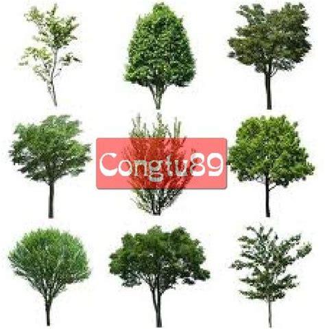 templates tree photoshop photoshop templates 91 trees hd textures pinterest