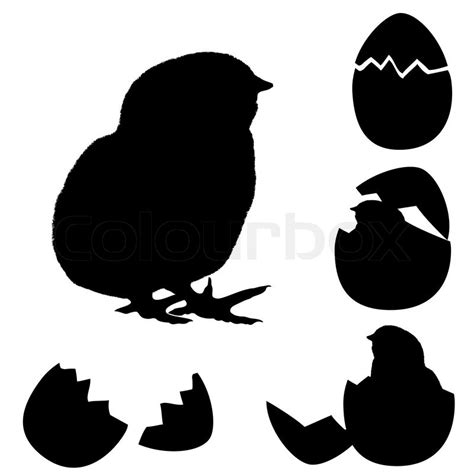 Egg Shell Wings vector illustration of a chicken silhouette newborn