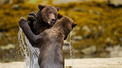 imagenes de animales jpg animales temas de rt