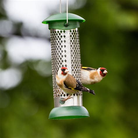 essential hygiene cleaning your bird feeders gardenbird