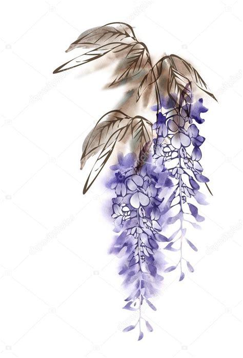 foto glicine in fiore fiore dell acquerello glicine foto stock 169 m grau 110216036