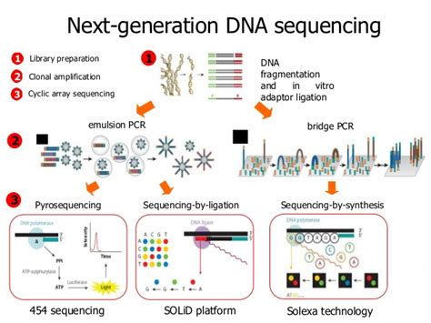The Templates For Next Generation Sequencing Are Flash Card by Ngs Introduction