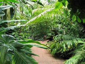 Home Design Plaza Tampa pathway lined with tropical plants