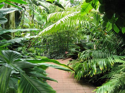 what are tropical plants pathway lined with tropical plants