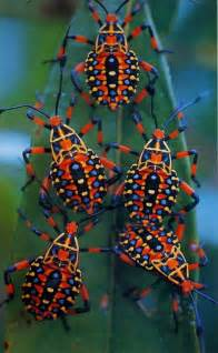 colorful bugs colorful insects