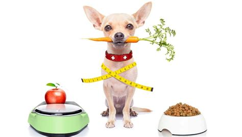 how many carbs in dogs let s talk how many calories a needs per day top tips