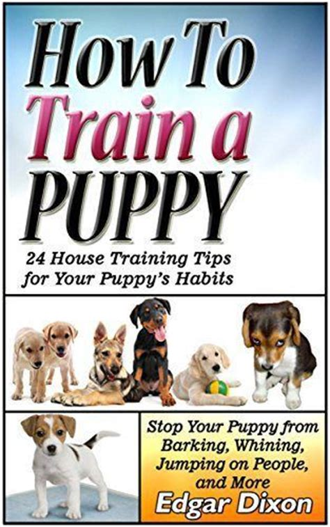how to stop my puppy jumping on the sofa how to train a puppy 24 house training tips for your