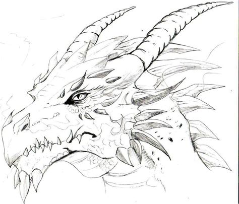 drawings of a dragons head sketches of dragons heads
